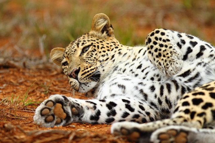 Africa-Holidays