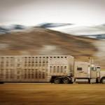 livestock-truck