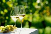 Chardonnay-2
