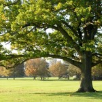 Expert Tips: How To Pick The Right Tree For Your Landscape