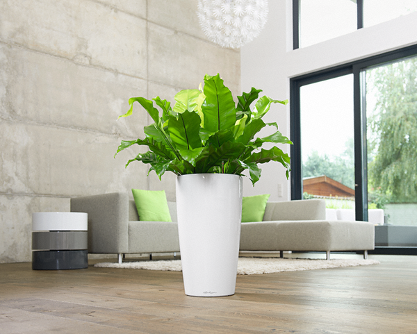 Tips On How To Use The Revolutionary Self Watering White Planter Pots