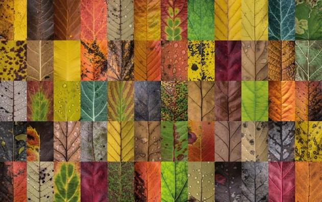 Australian Deciduous Trees