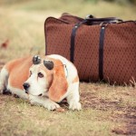 Our Tips for Sending Your Pet on a Safe Road Trip