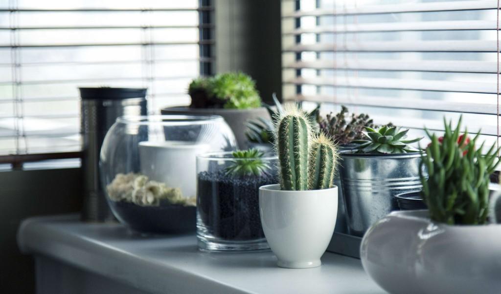 succulent_house_plants