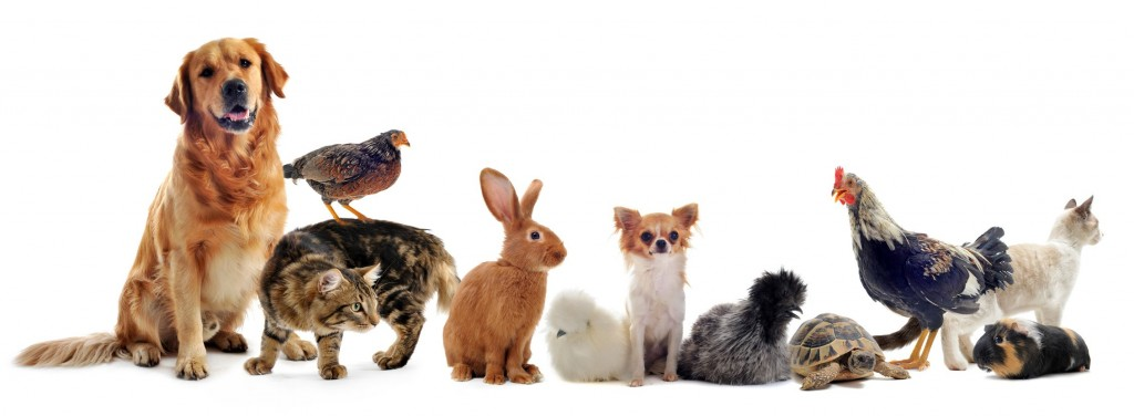 12603745 - group of pet in front of a white background