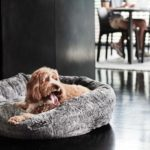 luxury dog beds australia