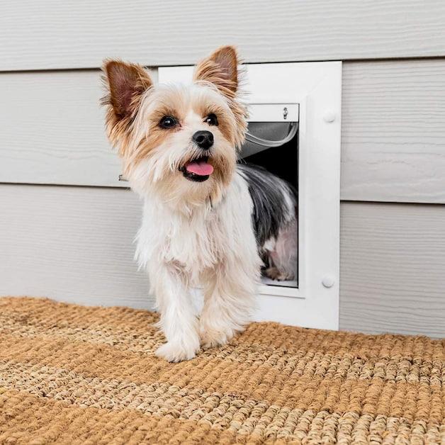 dog walking through dog door