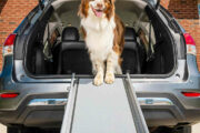dog ramps for cars