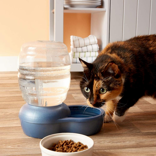 food and water bowl for cat
