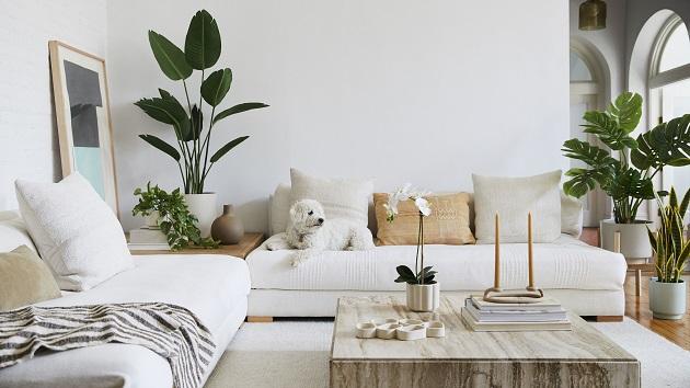 Plants in home decor