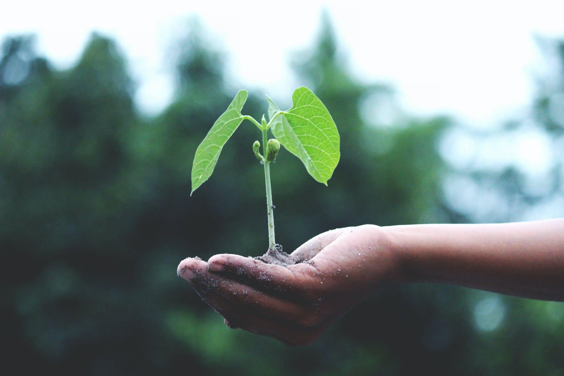 Plant in hand