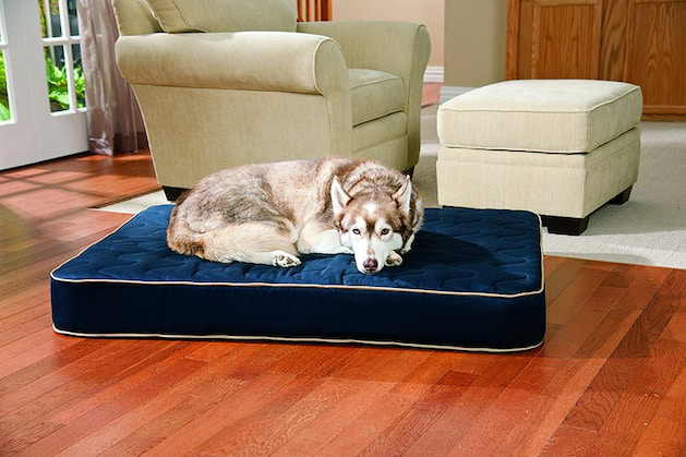 dog laying in his bed