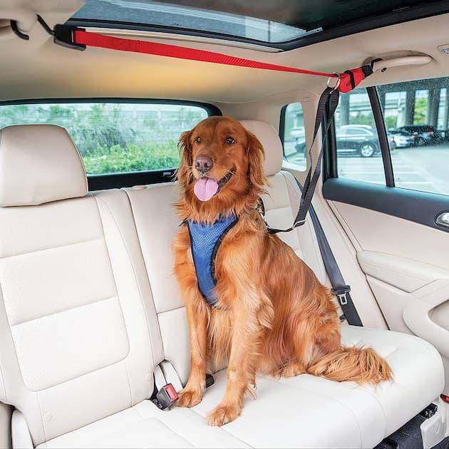 dog sitting in a back of a car