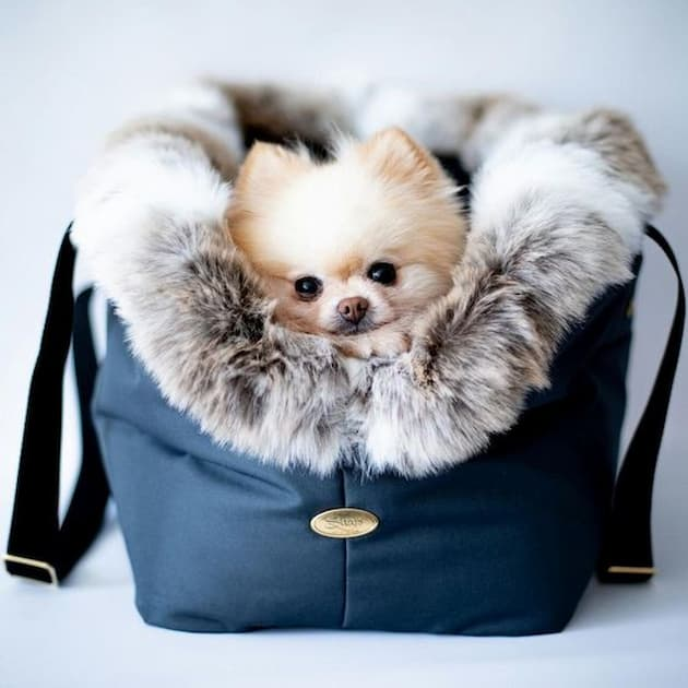 small dog in a dog carrier