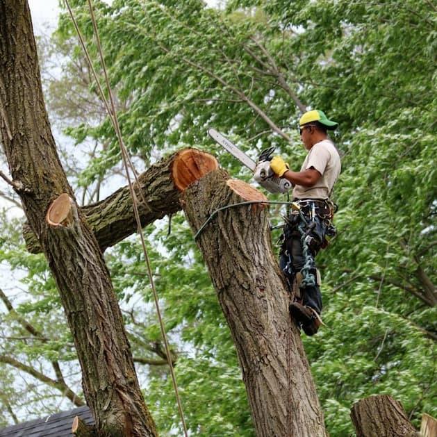 man on a tree cutting it