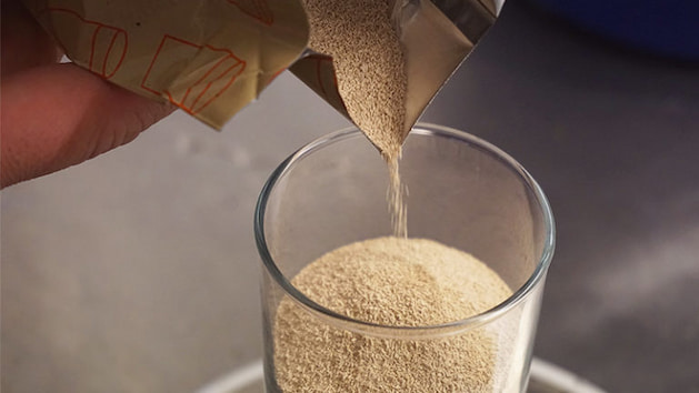 yeast for beer